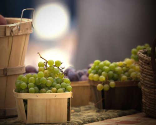 Болезни винограда и их лечение: как и чем, борьба средствами