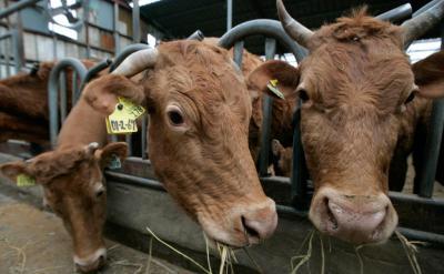 Как лечить ацидоз у коров