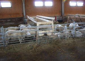 Овчарня для овец как построить овчарню самостоятельно