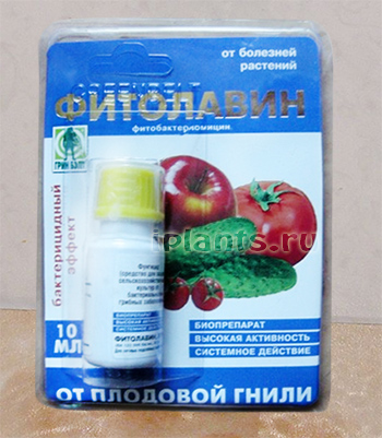 Особенности применения препарата Фитолавина для растений