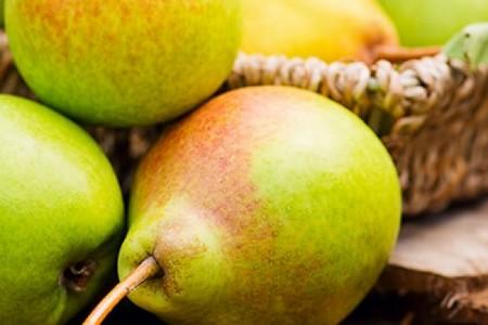Описание и особенности выращивания груши Нежность