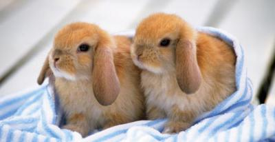 Как подстричь когти кролику инструкция