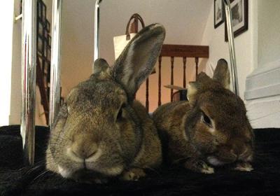 Как подстричь когти декоративному кролику в домашних условиях?