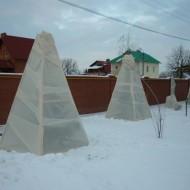 Как утеплить дерево инжира на зиму