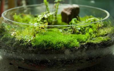 Мох выращивание и уход в комнатных условиях. Как вырастить мох в домашних условиях. Как разыскать это чудо природы