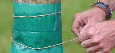 Как защитить зимой яблони от мышей? Способы защиты яблонь зимой от грызунов
