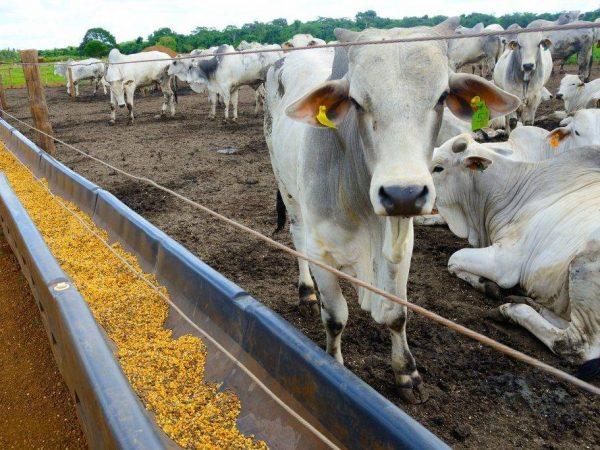 Корма для коров и телят какой комбикорм бывает полный обзор