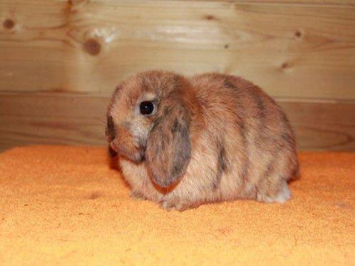 Кролик чихает причины что делать как лечить