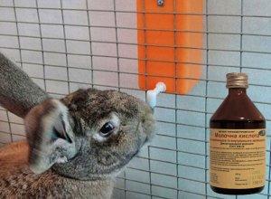 Как давать молочную кислоту для кроликов