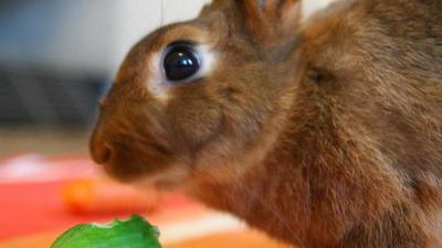 Можно ли кроликам огурцы