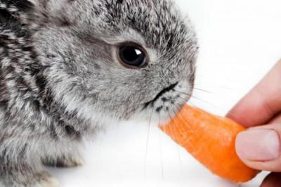 Можно ли кроликам яблоки? Что можно и что нельзя давать кроликам?