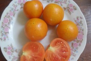 Правила посадка томатов в улитку