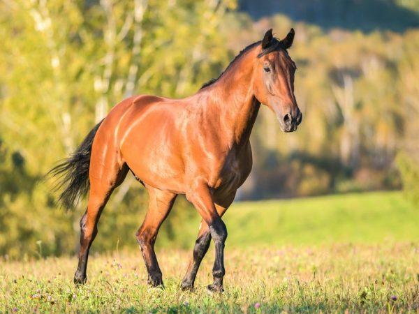 Расчет среднего веса лошади