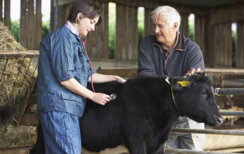 Какая температура должна быть у коровы