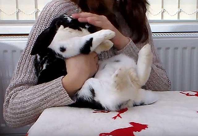 Температура тела у кролика