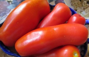 Помидорная колбаска томат сорта Жиголо