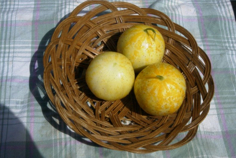 Сорт огурцов яблоко