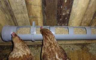 Кормушки для кур из пластиковых канализационных труб: делаем своими руками, инструкция, фото
