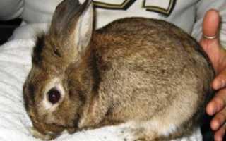 Какие болезни кроликов опасны для человека?