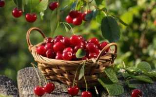Заморозка вишни на зиму: проверенные способы