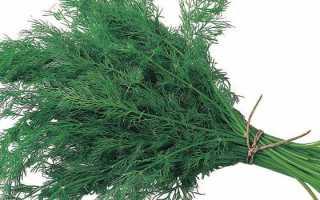 Укроп — лечебные свойства и противопоказания, применение семян в народной медицине
