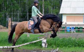 Вятская порода лошадей: описание, внешность, характер, применение
