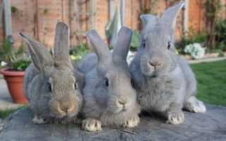 Разведение кроликов как бизнес: выгодно или нет? Расчёт рентабельности кроличьей фермы