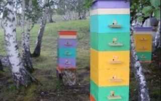 Основные правила многокорпусного содержания пчел