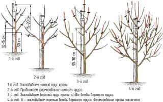 Обрезка груши осенью для новичков: схема, видео, инструкция