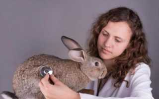 ВГБК — вирусная геморрагическая болезнь кроликов