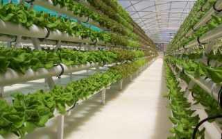 Гидропоника как бизнес — новые технологии прогрессивного выращивания растений — ⭐⭐⭐⭐⭐ — Бизнес идеи, 2018-2019