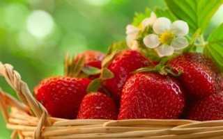 Сидераты для клубники: какие лучше посадить в междурядьях летом, что посеять в августе и осенью