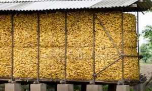 Хранение кукурузы