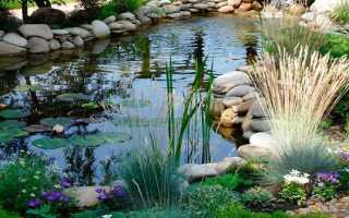 Растения для пруда водные — какие купить на дачу: названия растений