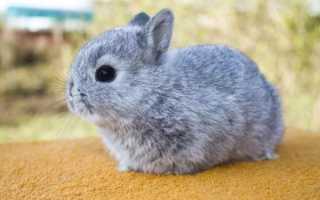 Почему дохнут кролики без видимых причин, мрут один за другим, что делать, как лечить молодняк