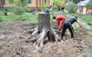Как уничтожить дерево без спиливания