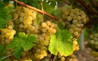 Чем подкормить виноград весной и летом перед цветением