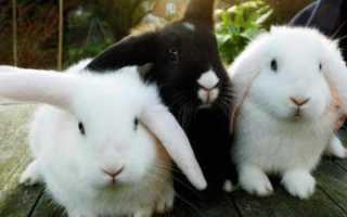 Можно ли купать декоративного кролика? Рекомендации по уходу и кормлению