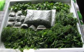 Как сохранить на зиму петрушку: рецепты заготовки свежей зелени на долгий срок