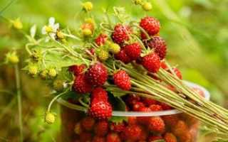 Лесная клубника: полезные свойства и применение дикой ягоды
