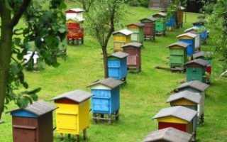 Метод Цебро в пчеловодстве: улей Цебро, сущность метода и советы