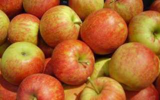 Яблоки джонаголд: описание сорта, особенности выращивания