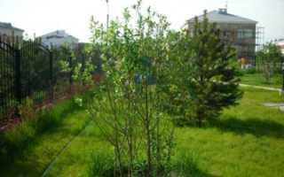 Посадка персика весной – занимательная и полезная работа