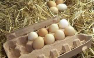 Как хранить инкубационное яйцо в домашних условиях: срок, температура