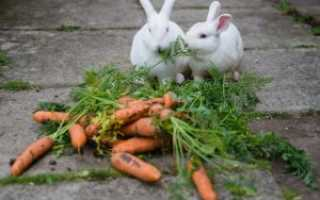 Можно ли кроликам морковь: в чём польза и вред, как часто давать