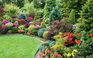 Выбор кустарников для дачи: декоративные, цветущие, морозостойкие, низкие