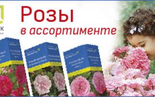 Вестник садовода — ЛУЧШИЕ ЛИЛИИ ДЛЯ НАШИХ САДОВ