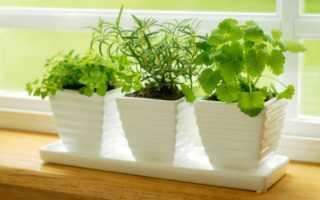 Подкормка растений касторовым маслом — правила приготовления и применения средства