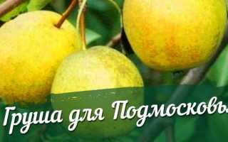 Лучшие сорта груш для Подмосковья: описание, фото