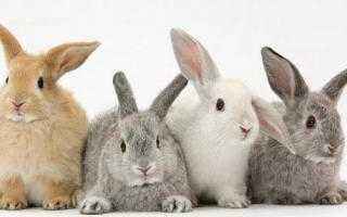 У кролика опух глаз: возможные причины, методы и особенности лечения